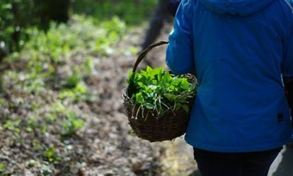 Wild Food Foraging and Cookery Course 1