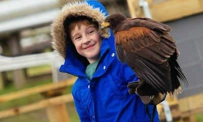Full Day Medieval Falconry Experience at Hedingham Castle 1
