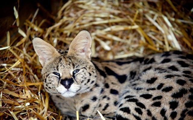 Meet the Meerkats Servals and Lemurs at Hoo Farm for Two 1