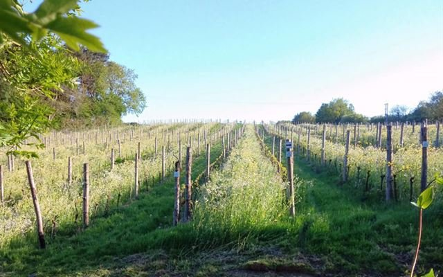 Ploughmans Lunch and Tastings at Sedlescombe Vineyard for Two 1
