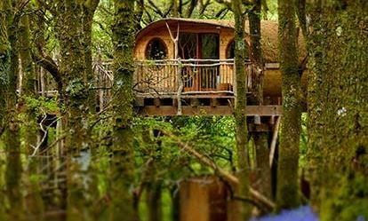 Two Night Family Tree House Escape 1